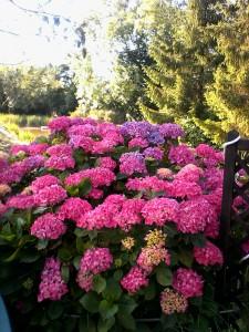 2017 07 07 un bouquet sur  la terrasse